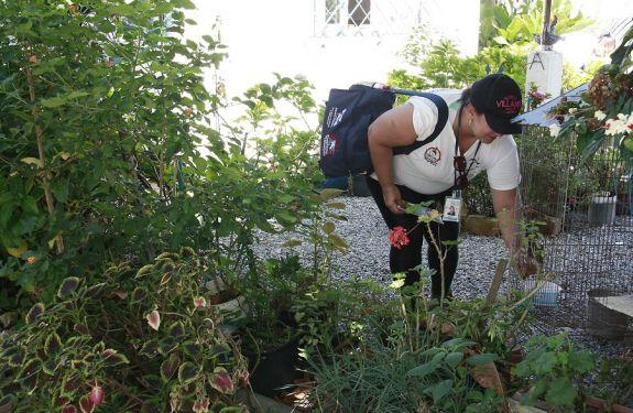 Aumenta número de focos positivos do Aedes Aegypti em Balneário Camboriú