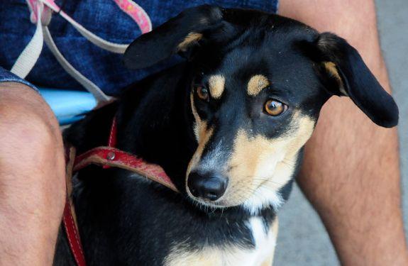 Piçarras organiza mutirão gratuito para castrar 108 cães e gatos