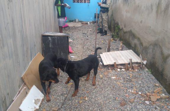BC: Cães em situação de maus-tratos são recolhidos pela Guarda Ambiental
