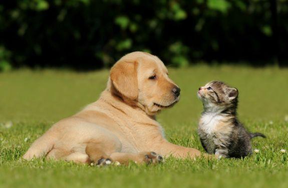 BC fará censo para mapear população de cães e gatos na cidade