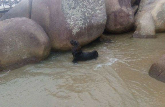 BC: Leão Marinho aparece na Praia de Laranjeiras