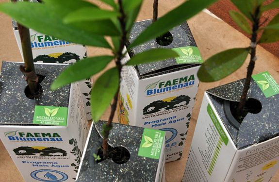 BNU: Faema vai distribuir mudas durante evento na Vila Itoupava