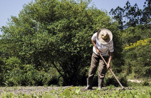 Calendário com o tema 'Camboriú Rural' será lançado na sexta-feira