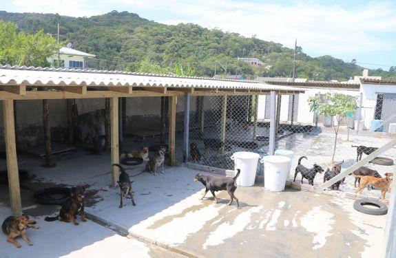 Canil Municipal de Itapema recebe reforma