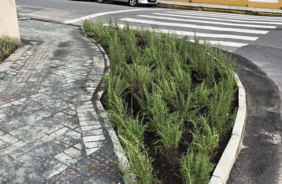 Empresa de Itajaí transforma esquina em horta
