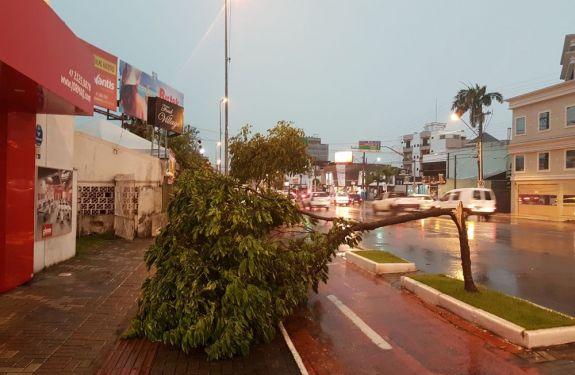Chuva volta a causar alagamentos, quedas de árvores e destelhamentos em SC