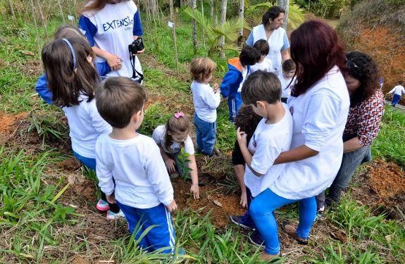 Empresas da região investem em plantio de árvores