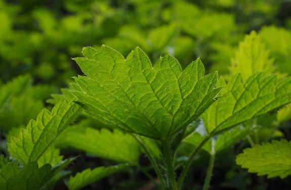 Encontro em Itajaí debate uso de plantas medicinas