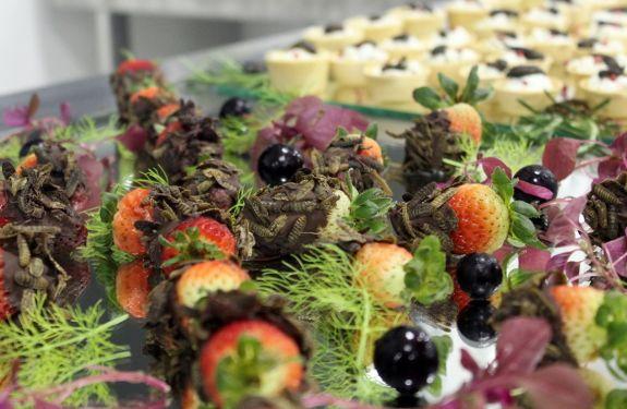 Avantis promove palestra sobre o uso de insetos na gastronomia