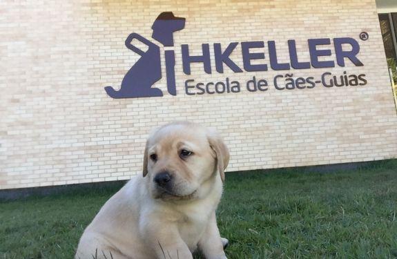 Futuros cães-guia de Balneário Camboriú precisam de socializadores