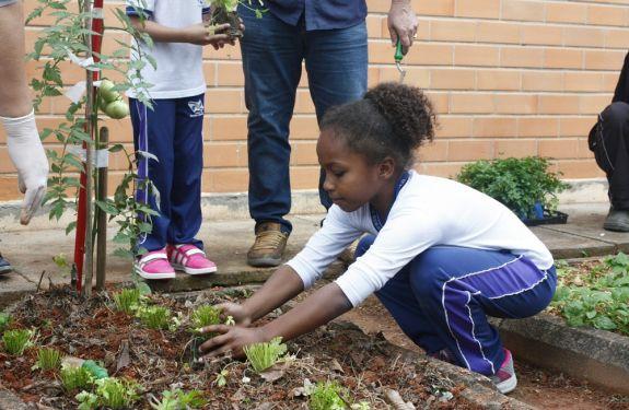 Hortas das escolas de Balneário Camboriú estão sendo revitalizadas