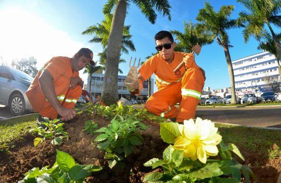 Itajaí ganhará novo visual com 25 mil mudas de flores