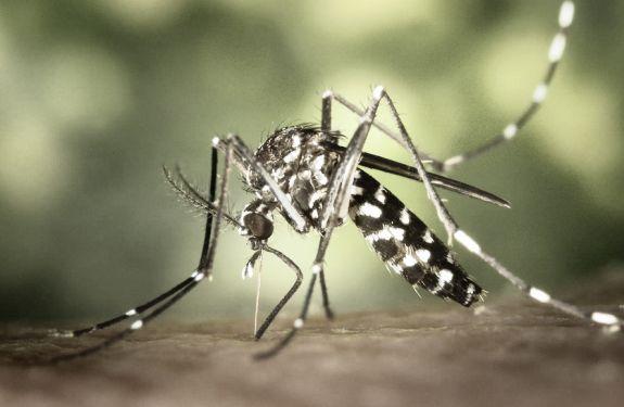 Itajaí participa de mobilização nacional contra o Aedes aegypti