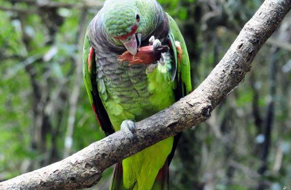 ONG ambiental de Itajaí concorre a prêmio nacional