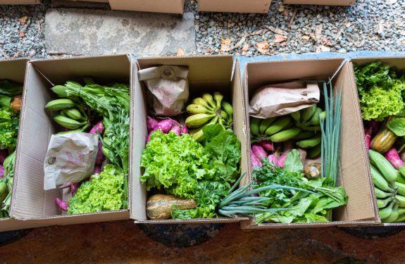 Piçarras: Projeto atende 56 famílias com alimentos orgânicos
