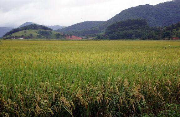 Secretaria de Agricultura de Camboriú recebe repasses para aquisição de máquinas e implementos