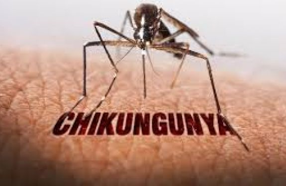 Segundo caso de Chikungunya importado é registrado em Balneário Camboriú