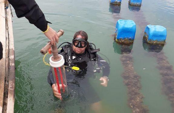 Univali e Embrapa avaliam áreas de cultivo de moluscos